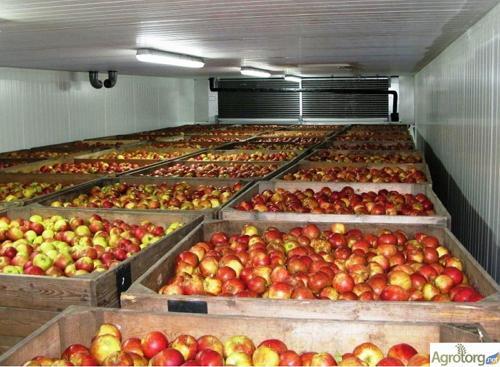 Хранение яблок в фруктохранилище