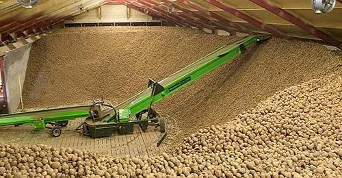 Навальное хранение картофеля