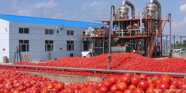Завода по переработке томатов