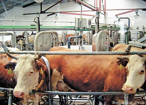 фермы по производству молока