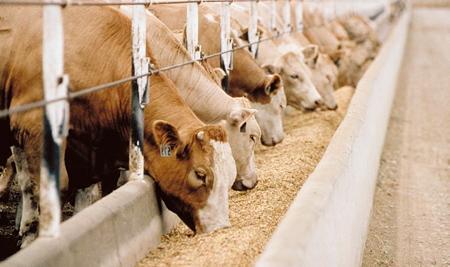 корм для скота